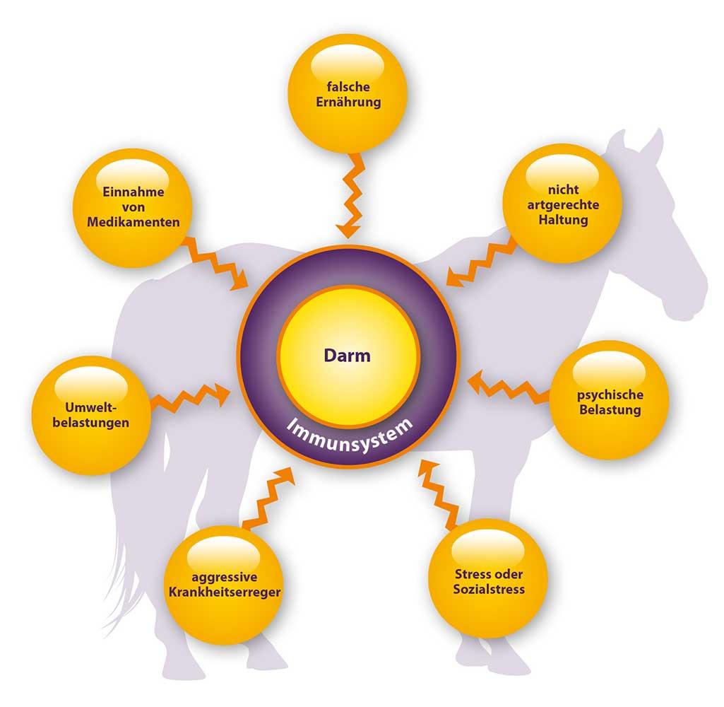 Viele Stressfaktoren beeinflussen Darm und Immunsystem
