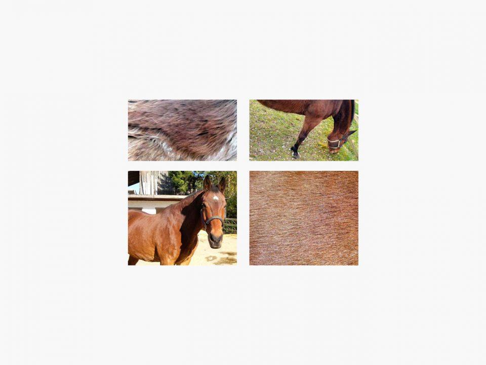 GRANUTOP unterstützt den Fellwechsel und hilft bei Cushing.
