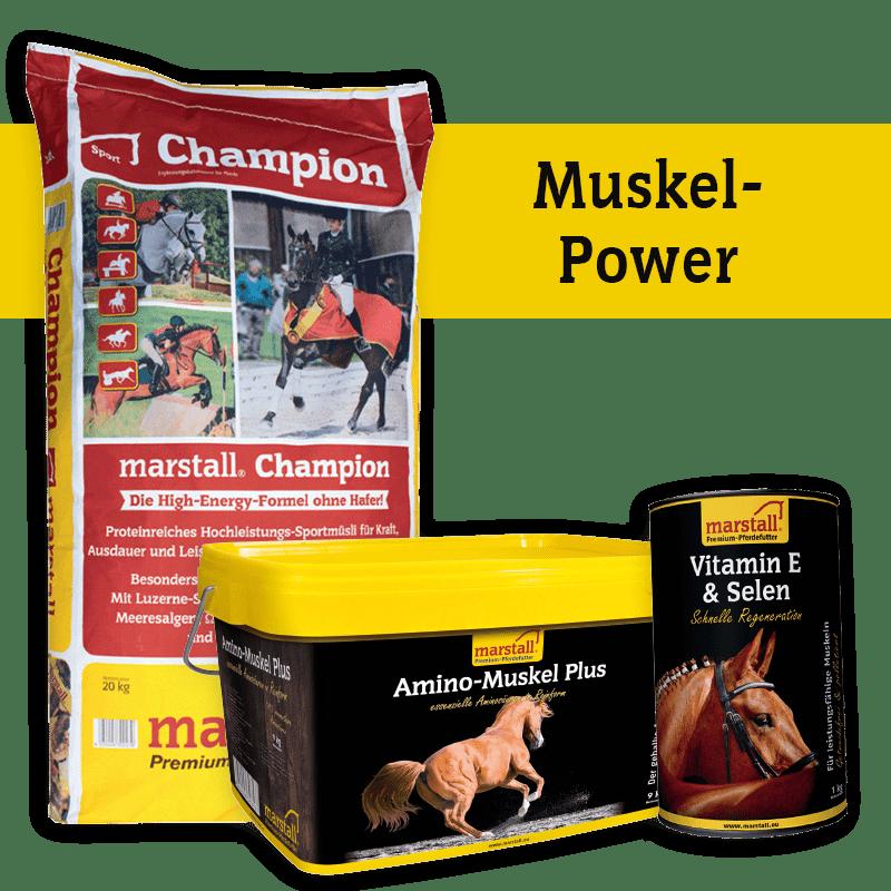 Shop-Muskel-Power-mitClaim